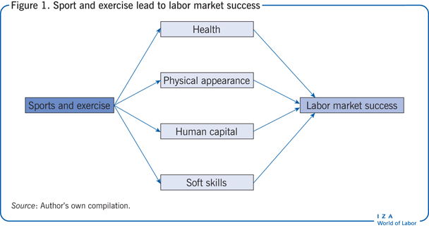Sport and exercise lead to labor market                         success