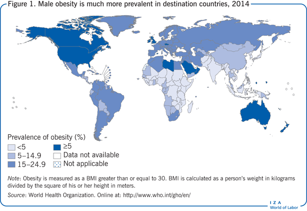 Male obesity is much more prevalent in                         destination countries, 2014